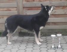 bild_1_nuortariikas-bealdomuorji-bealdegry