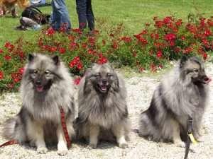 1609_badener-hundetag