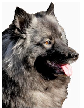 Deckmeldung: Wolfsspitze vom Föhrenwald