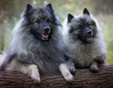 Wurfmeldung Wolfsspitze
