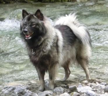 Deckmeldung Wolfsspitze
