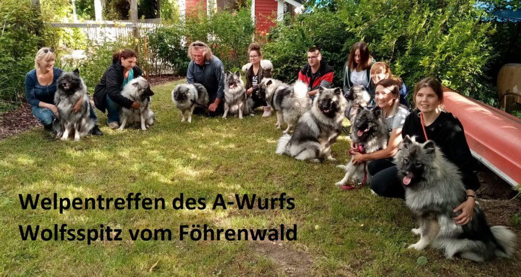 Welpentreffen A-Wurf Wolfsspitz vom Föhrenwald